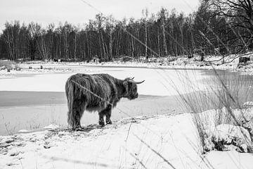 Natur-Highlander von Daphne Jonkers