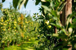 De Nederlandse appelboomgaard van Everyday photos by Renske