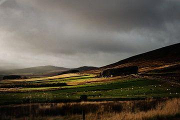 Landschap in Cairngorms National Park in Schotland van RUUDC Fotografie