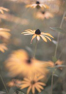 fleurs partie 215 sur Tania Perneel