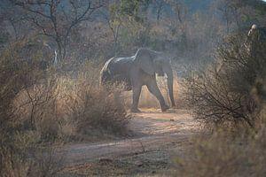 olifanten van gj heinhuis