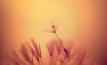 Paardenbloem pluis in zonnige kleuren. van Hilde Remerie