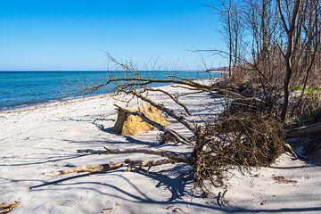 Plage sur la côte de la mer Baltique sur l'île de Poel