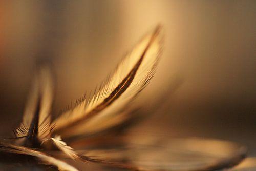 Champagne (feathers) van Carla Mesken-Dijkhoff