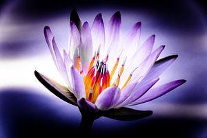 The Power Water Lily von MR OPPX