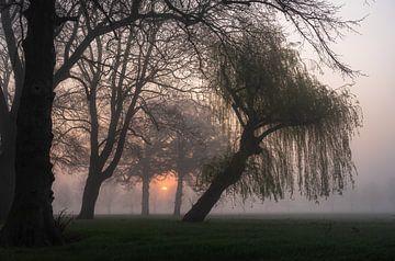 neblige Sonne zwischen den Bäumen von Tania Perneel