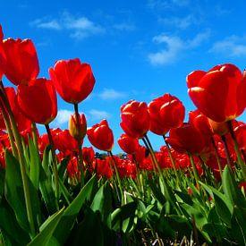 Dutch flowers in red (Tulpen) von Loraine van der Sande