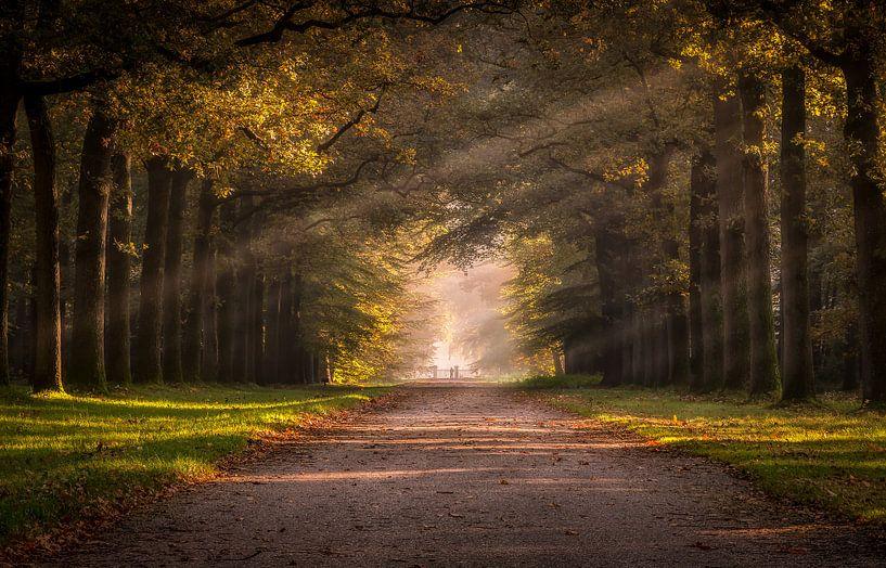 Herfst in de paleistuin van Patrick Rodink