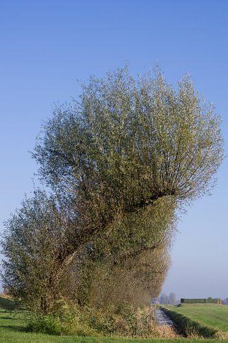 Gebogen bomen kunst.