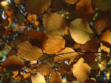 Kleurrijke herfstbladeren in de Elzas, Frankrijk van Koolspix