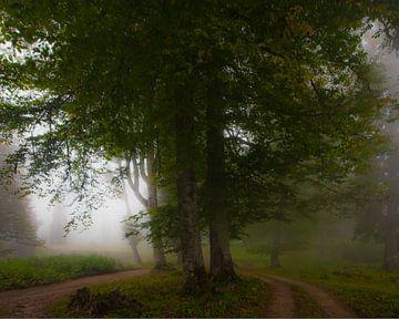 Grote bomen in de mist. Mistig bos in het legendarische oude Griekse Colchis, Kaukasus, Abchazië. van Michael Semenov