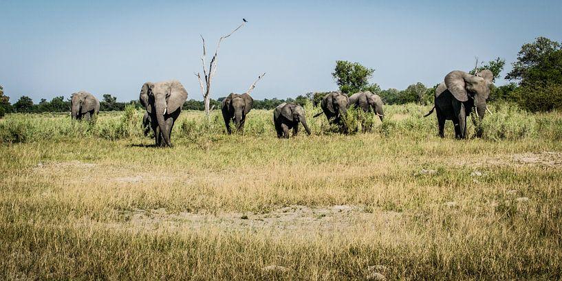 Olifantenfamilie van Sander RB