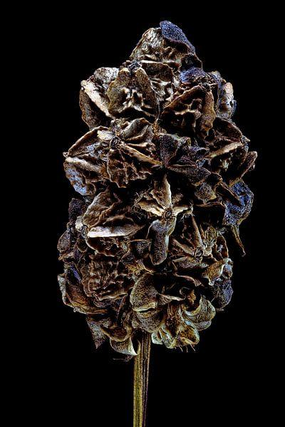 Upcycled Beauty - Grote pimpernel - Sanguisorba officinalis - van Christophe Fruyt