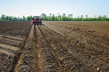 Aardappelrijen maken en aardappels poten van Ruud Morijn