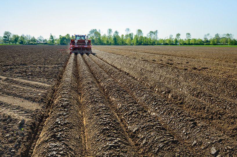 Faire des rangées de pommes de terre et planter des pommes de terre sur Ruud Morijn