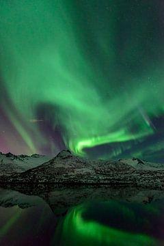 Noorderlicht in de nachtelijke hemel boven de Lofoten eilanden in Noorwegen van Sjoerd van der Wal