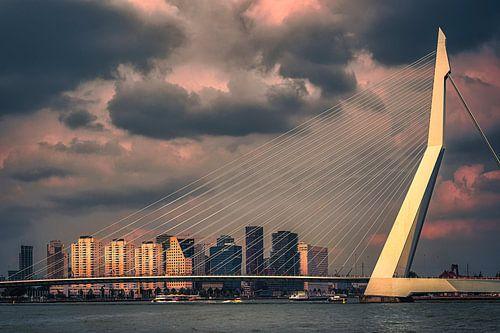 Schönes Licht auf der Erasmusbrücke in Rotterdam