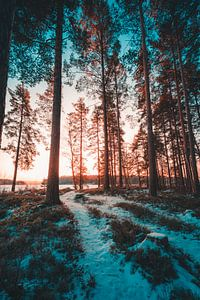 Zweden bos in winter van