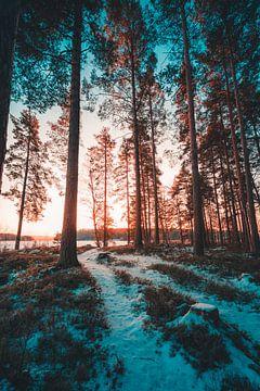 Zweden bos in winter von Andy Troy