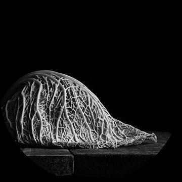 Savooiekool, zwart wit van Mariska Vereijken