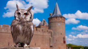 Uil bij kasteel muiderslot