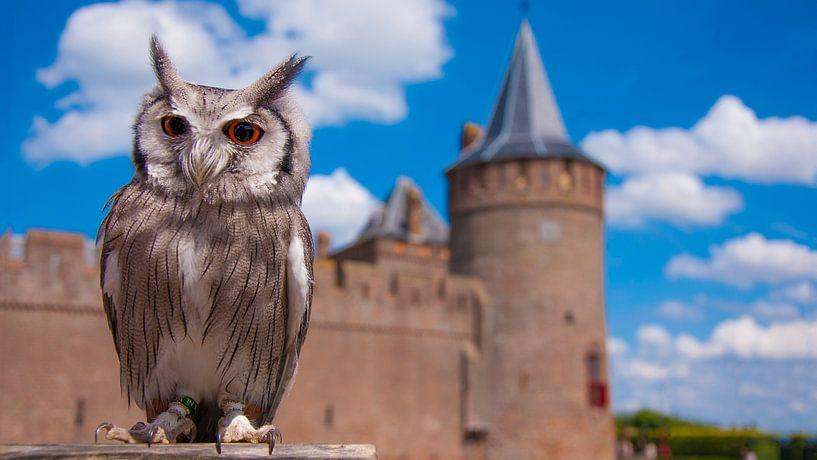 Uil bij kasteel muiderslot van Mark Verhagen