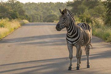 Zebra im Weg von Marijke Arends-Meiring