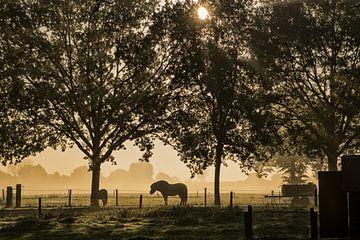 Paard in het licht von Hans Krenger