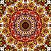 Red Maple van Frans Blok thumbnail
