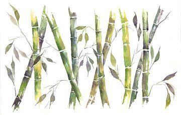 Bambus sur