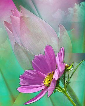 Rêves floraux sur Gertrud Scheffler