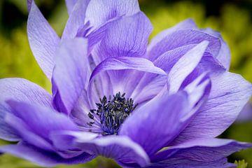 Perfekt lila von Anouk Snijders