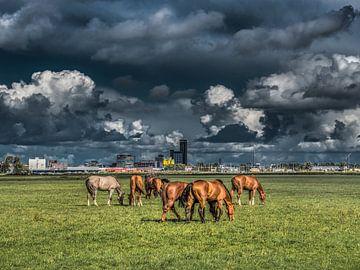 Zicht op Leeuwarden met paarden op de voorgrond von Harrie Muis