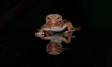 Gecko von Ema Erkens