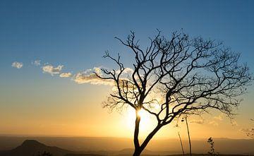 Sonnenuntergang mit Baum von Iris Hagemans
