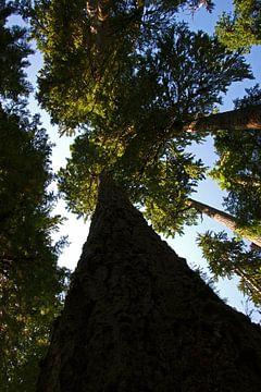 Hoh Rainforest, Parc National Olympique sur Jeroen van Deel