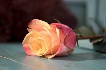 gevallen roos van Dirkje Sol