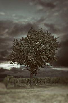 Boom in wijngaard van Norman Krauß
