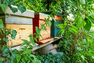 Utrecht - Bienenstock durch Pflanzen gesehen von Wout van den Berg
