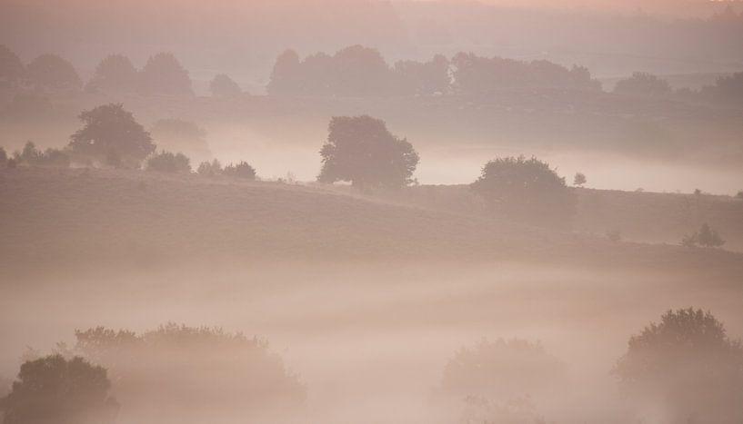 mist van hanny bosveld