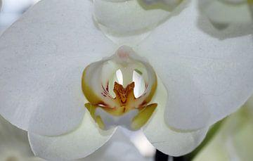 Orchidee von Clicksby JB
