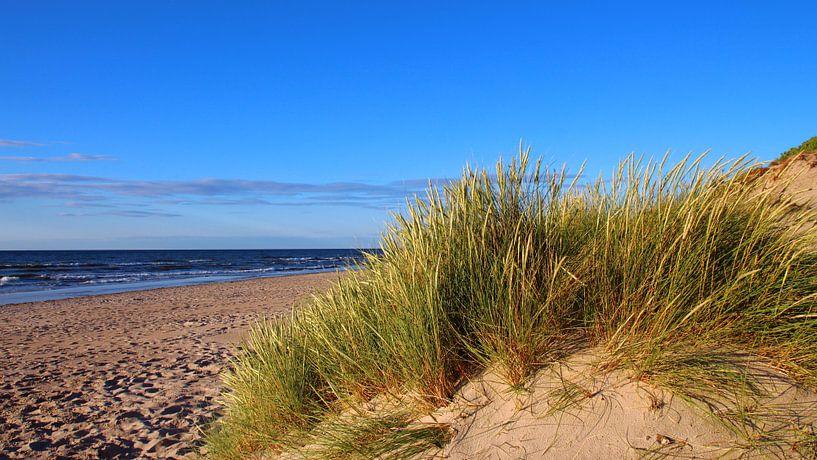 Dünen auf der insel Rügen van Ostsee Bilder