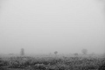 Markiezaatsmeer - Mist von Maurice Weststrate