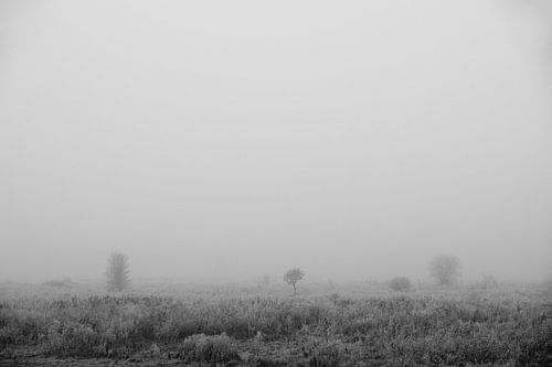 Markiezaatsmeer - Mist van Maurice Weststrate