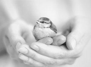 weinig vogel