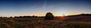 Mookerheide (panorama) van