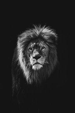 Löwe von Niels Eric Fotografie