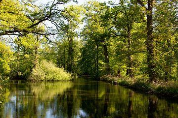 Wald mit Spiegelung im Wasser von Bianca ter Riet