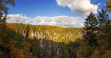 Herbstwald in der Sächsischen Schweiz von Frank Herrmann
