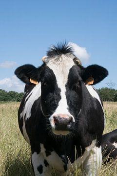 Koe van Maaike Krimpenfort